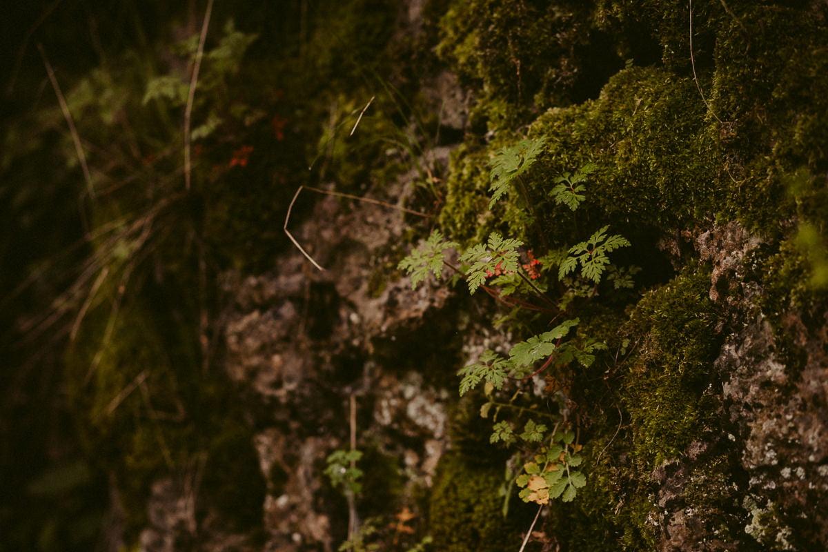 Sylwia-Roman-sesja-narzeczenska-ojcow-malopolska-krakow-fotografia-slubna-jura_20170503_11-16-12_IMG_9258 Sylwia & Roman - sesja narzeczeńska - Jura Krakowsko-Częstochowska - Dolina Prądnika